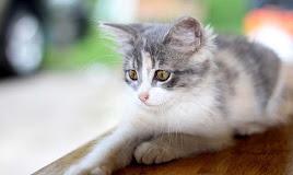 Sangat Ampuh! 7 Cara Mengusir Kucing Liar agar Tidak Kembali Lagi