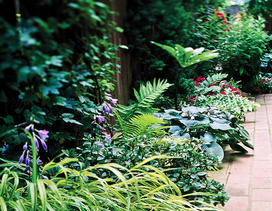 the 10 best perennials for shade - Shaded Flower Garden Ideas