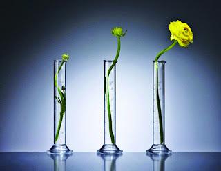 É evidente que uma mudança é necessária. Diante desta necessidade, elaboramos um outro questionamento. É possível mudar? Este dilema vem sendo estudado pelos filósofos, sociólogos, psicólogos e outros segmentos da ciências ao longo dos séculos. (Flor amarela cresce em vaso).