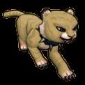 Sandy Cat Cub - Pirate101 Hybrid Pet Guide