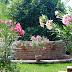 Egy kert, ahol a leanderek születnek