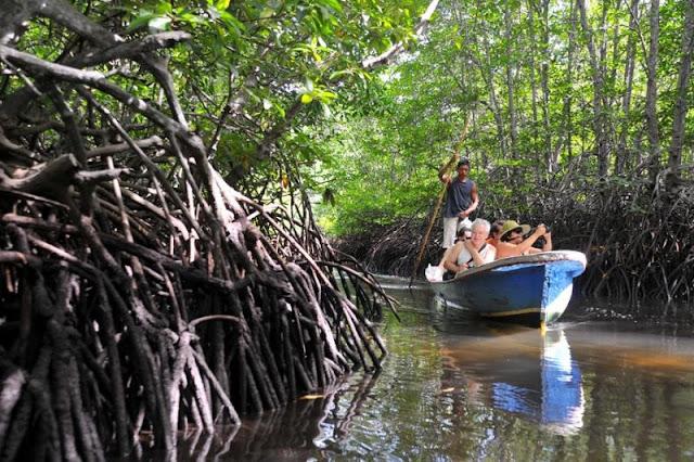 Jelajahi Pesona Hitan Mangrove Kubu yang Langka