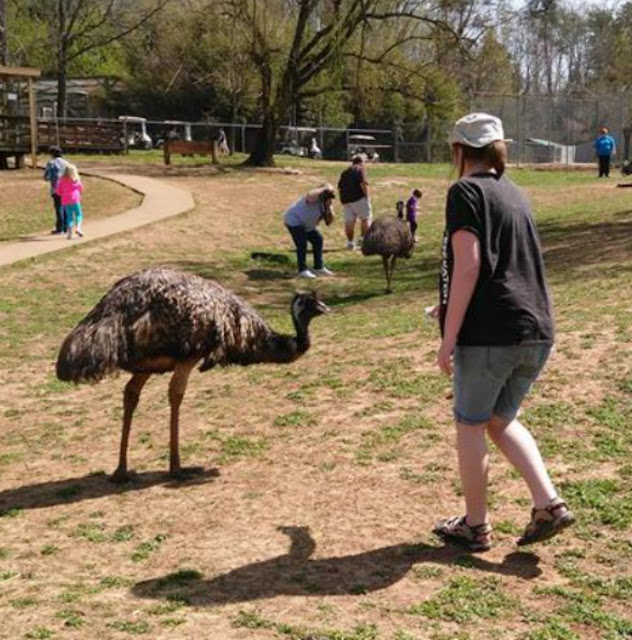 Play with Emus Kentucky Zoo