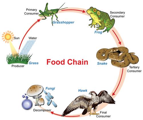 Define Natural Food Movement