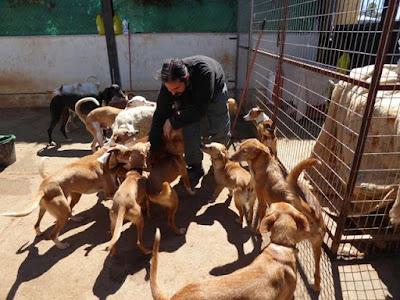 ¡Urge! Se busca familia para 50 perros de un refugio al que no le renuevan el alquiler