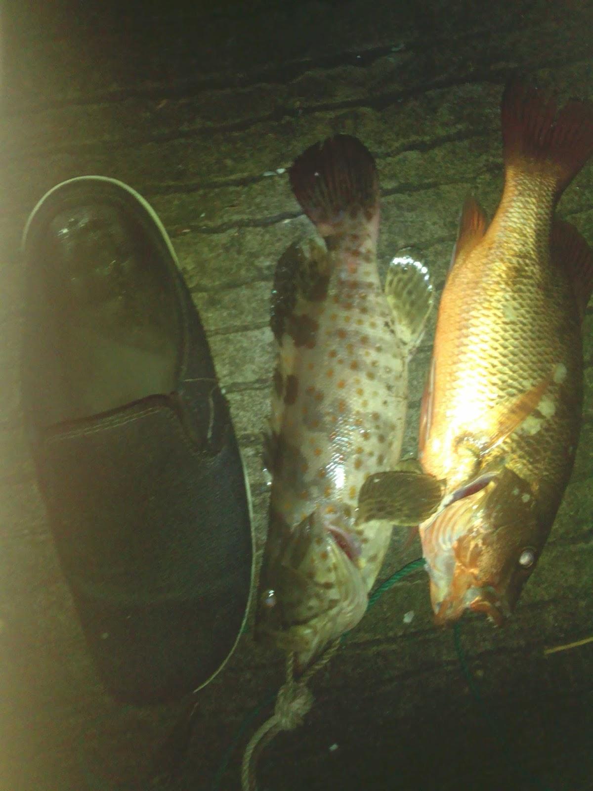 Jenis Ikan Air Payau Target Mancing Di Muara Sungai