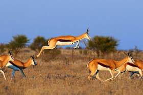 Aslay May Cosh 5 Fastest Animals In The World
