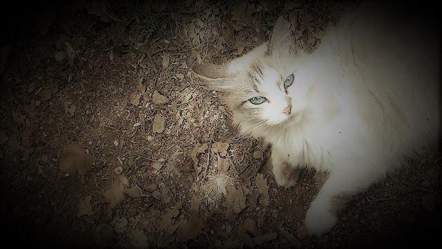 chat de janvier 18, malooka