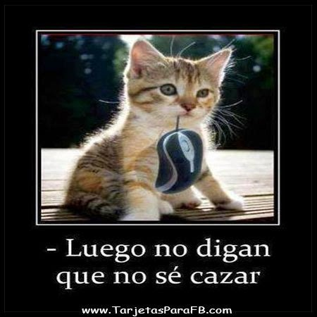 Imagenes chistosas de animales con frases chistosas