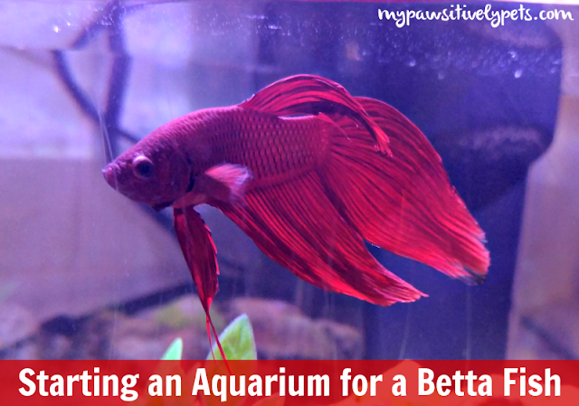 Starting an Aquarium for a Betta Fish With API Fishcare Aquarium Kit