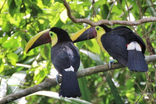 Gamboa Rainforest Resort y Lago Gatún en Panamá