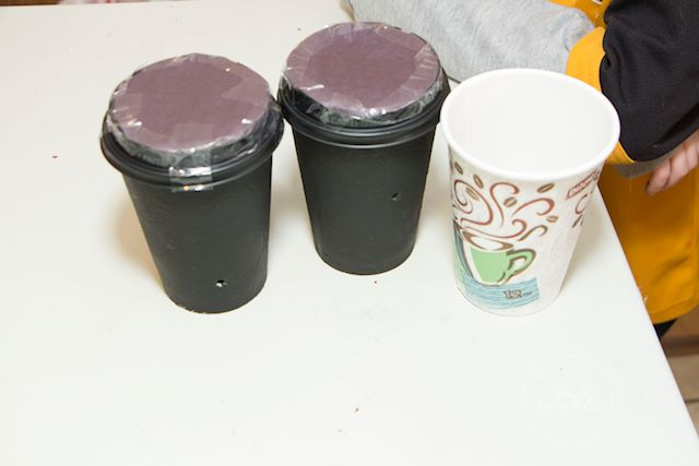 Seeds growing in these cups will show how the plants grow to the light.