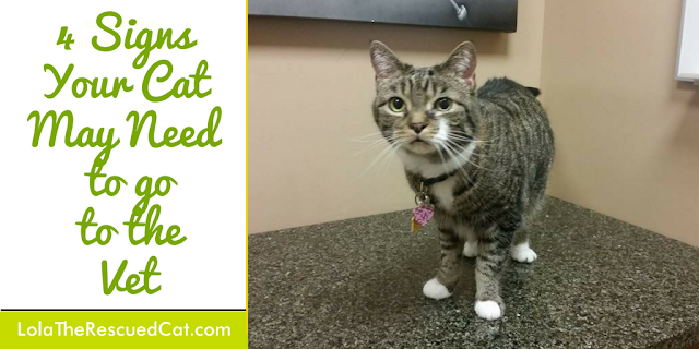 signs of illness in cats|#Cat2VetDay