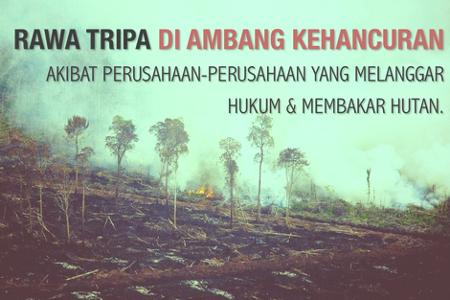 Inilah Video Vonis PT. SPS Bersalah Membakar Lahan Gambut di Aceh