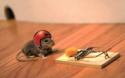 mice wearing helmet and fighting funny