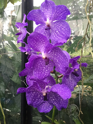 Close-up pic of purple-coloured Orchid flowers