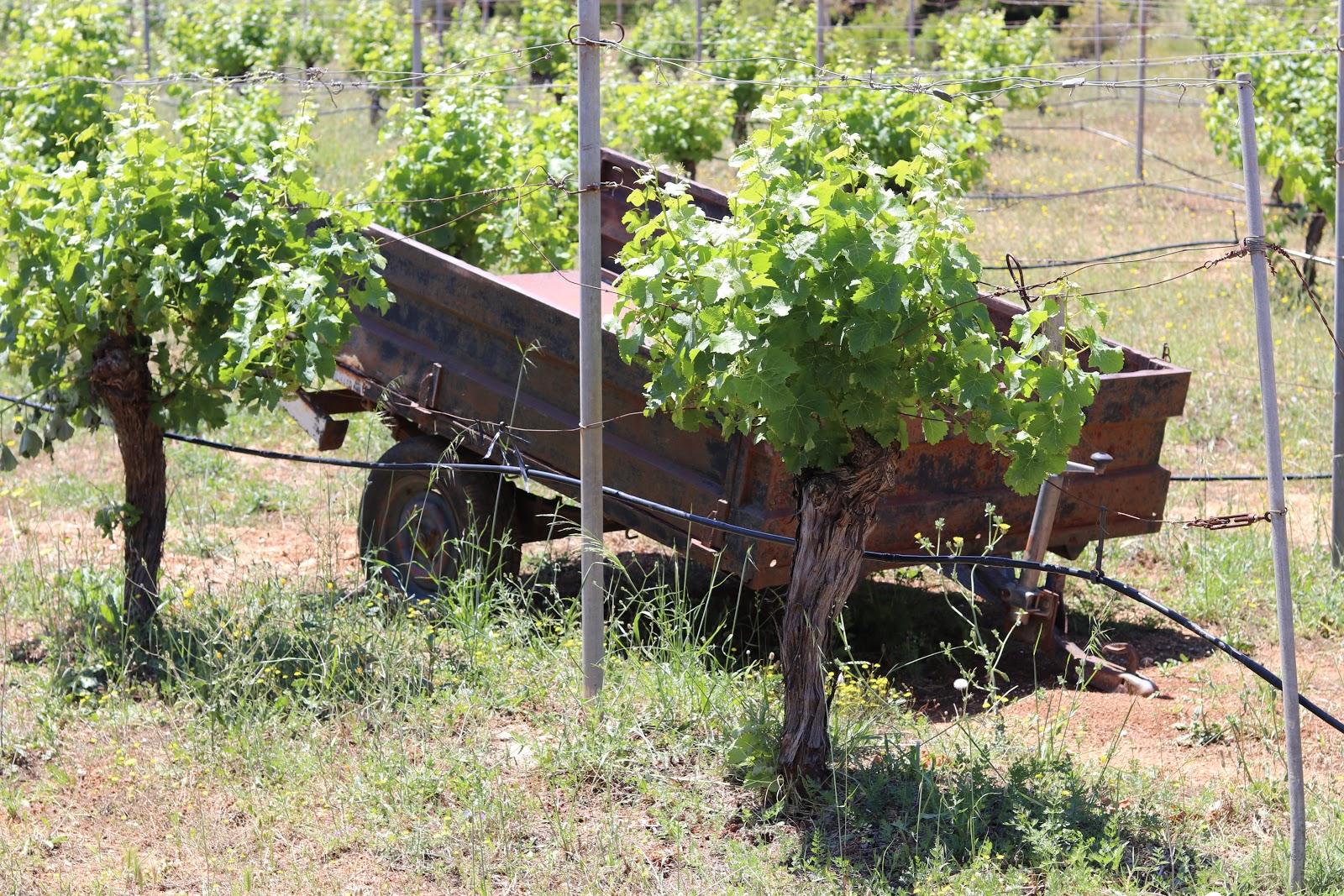 Gentilini Winery, Kefalonia