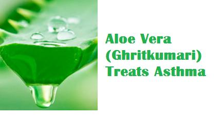 Aloe Vera (Ghritkumari) Treats Asthma