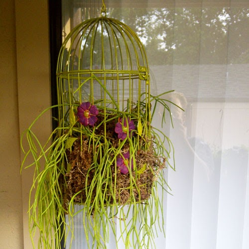 Birdcage Planter: The Rainforest Garden: DIY Hanging Birdcage Planter