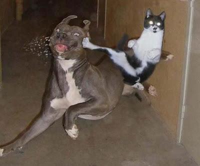 lotta tra un cane e un gatto