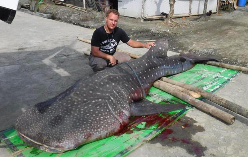 Tubarão-baleia dá à costa morto