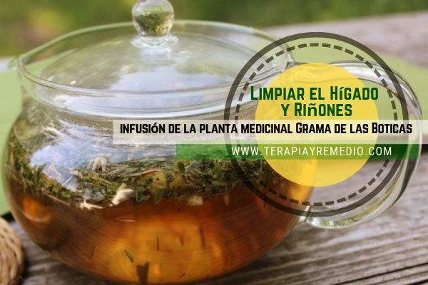 Infusión de grama de las boticas para limpiar el hígado y riñones
