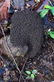 ant nest waste