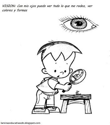 La vista. Los 5 sentidos