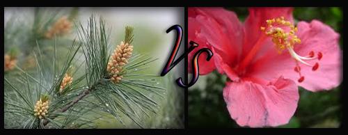 Tumbuhan Gymnospermae dan Angiospermae