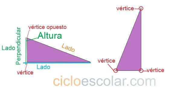 Propiedades de la altura en los triángulos e ilustración de los vertices