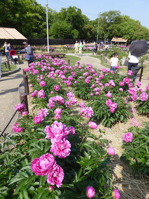 久宝寺緑地のシャクシャク園
