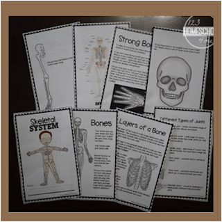 skeletal system worksheets for kids