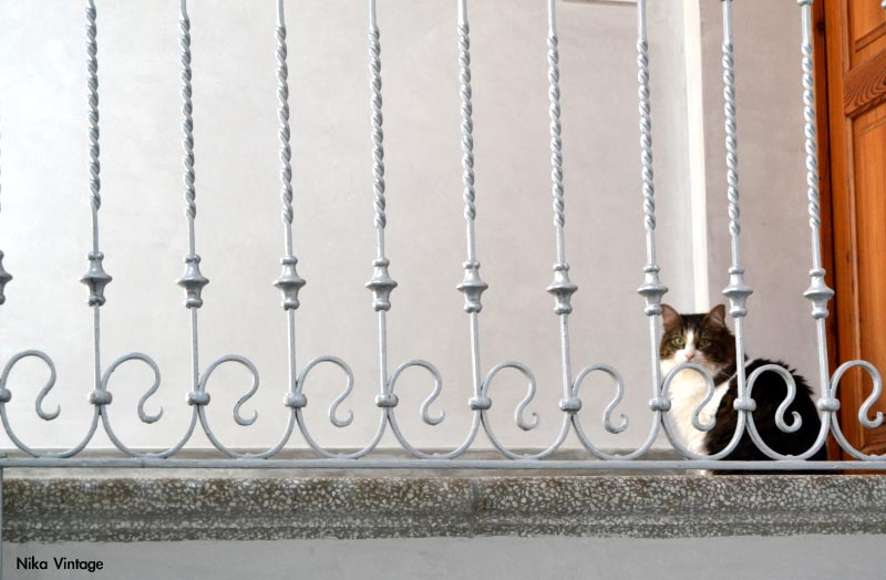 gato, escalera, Durero