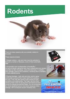 Pest Control Morisset