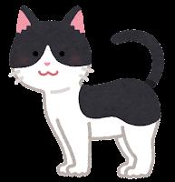 猫の模様のイラスト(黒白)