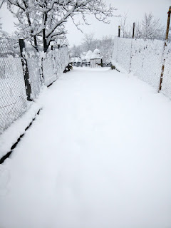 Deep undisturbed snow to walk through