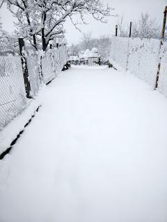 Deep undisturbed snow to walk through