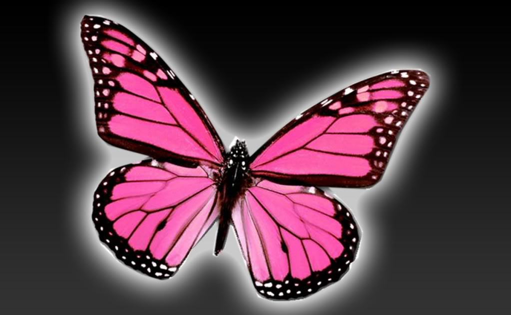 January 2013 | Butterfly Background Wallpapers