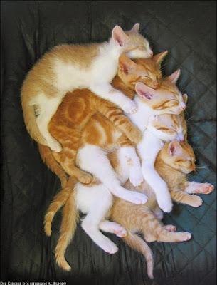 Fünf weiß-braune Katzen kuscheln und schlafen - süße Katzenfotos
