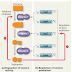 Regulasi Ekspresi Gen pada Bakteri