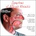 Rinitis Definisi Penyebab Dan Pengobatan serta Gejala klinis Penyakit Rinitis Menurut Ilmu Kedokteran