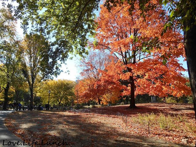 I colori di Central Park in autunno