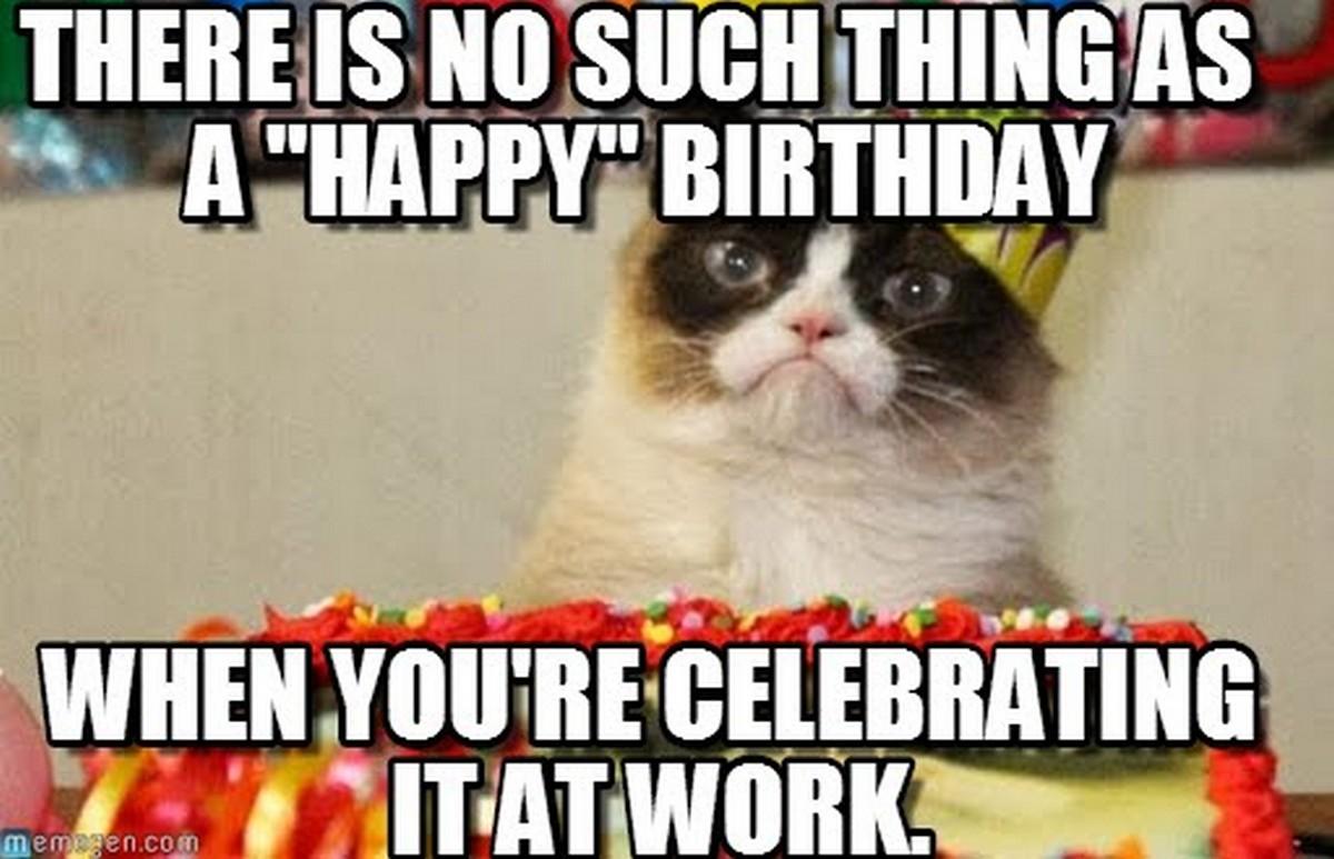 Funny Cat Birthday Meme : Chuck s fun page grumpy cat still lives images