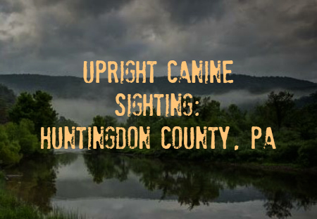 Upright Canine Sighting: Huntingdon County, PA
