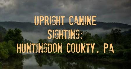 Upright Canine Sighting: Huntingdon County, PA