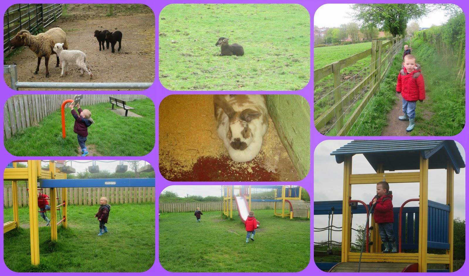 A city farm Gorse hill family farm Leicester