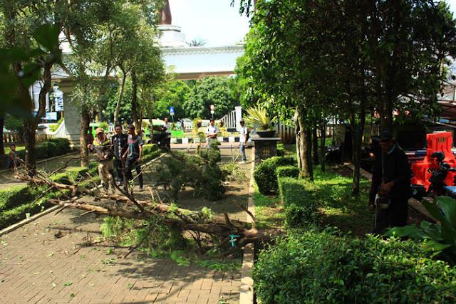 Tips Pintar Merawat Taman di Rumah Agar Tetap Hijau dan Asri