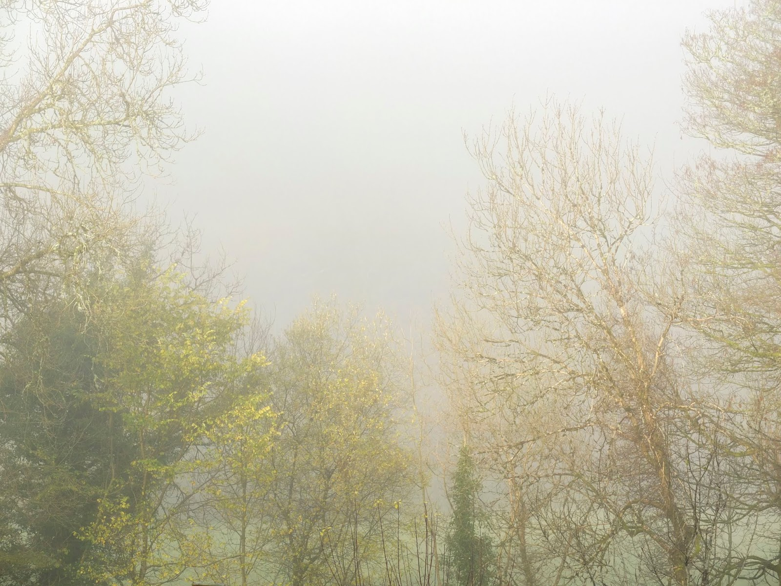 Autumn trees covered in a thick fog and sun trying to burn through.
