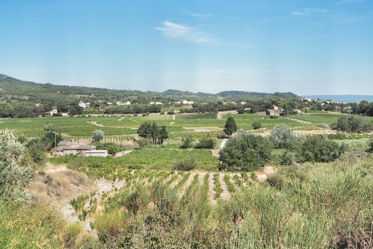 Panorama sur le vignoble de Vacqueyras dans le Vaucluse