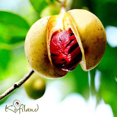 Spice Plantations Visit in Idukki